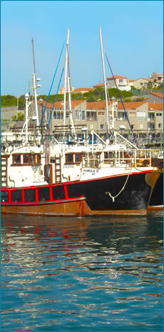 Calamari Exporter | Squid Exporter | Ocean Sun Fishing | St Francis Bay | South Africa